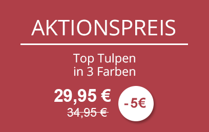 AKTIONSPREIS - Top Tulpen in 3 Farben